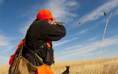 Top Tips For A Successful Pheasant Hunting Trip
